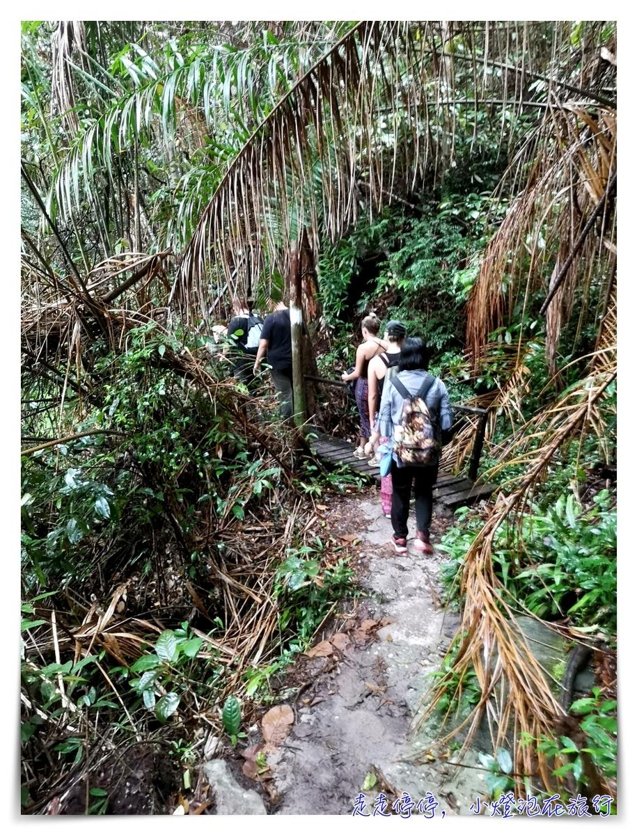 離台灣最近的雨林|東馬古晉峇哥國家公園,走一趟雨林、看一片原始、靜一下心~
