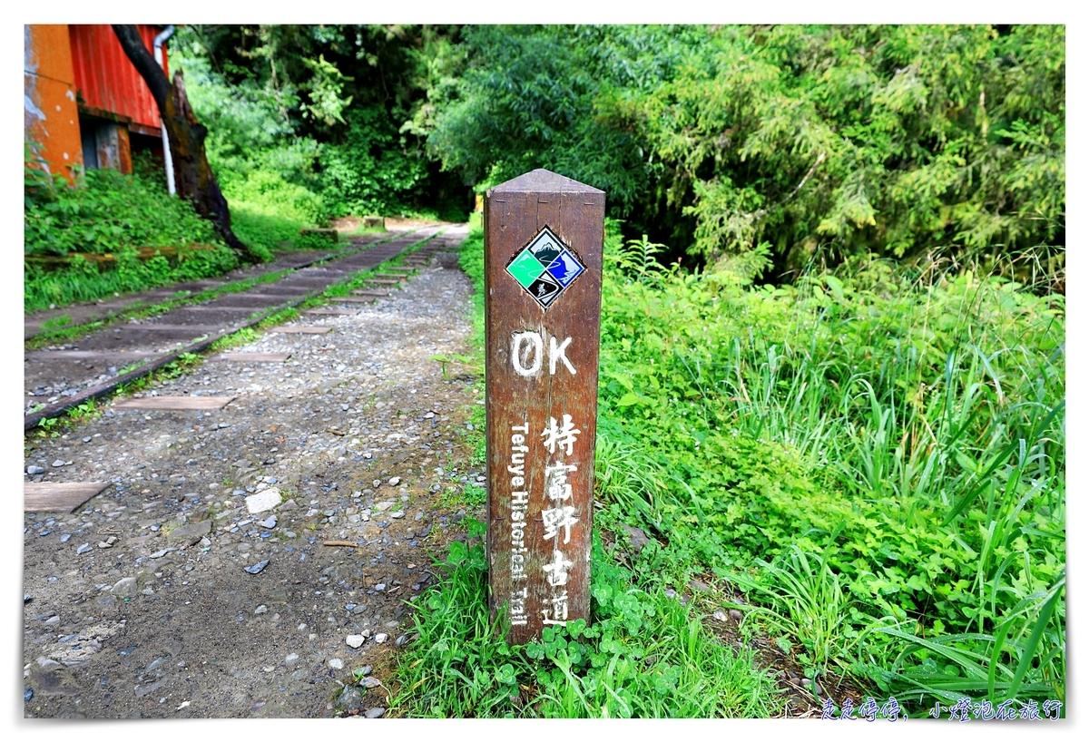 特富野古道攻略(自忠段)|這才是網美步道、最美森林鐵道。古道、鐵道、森林、橋樑四大特色,平緩好走、美麗好拍~連老人、小孩、小寵物都可以走上一趟~