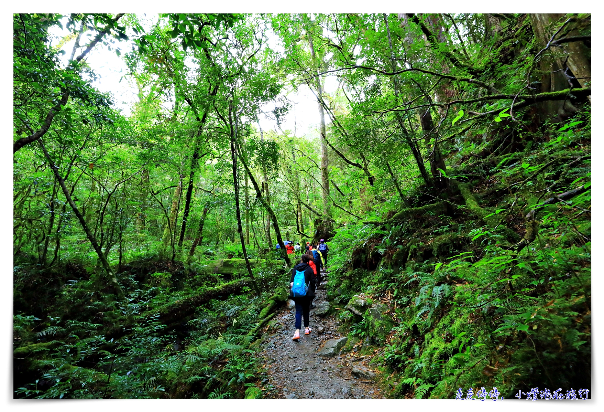 司馬庫斯行程攻略,賞櫻、住宿選擇、交通、景點、注意事項、美食、巨木群步道