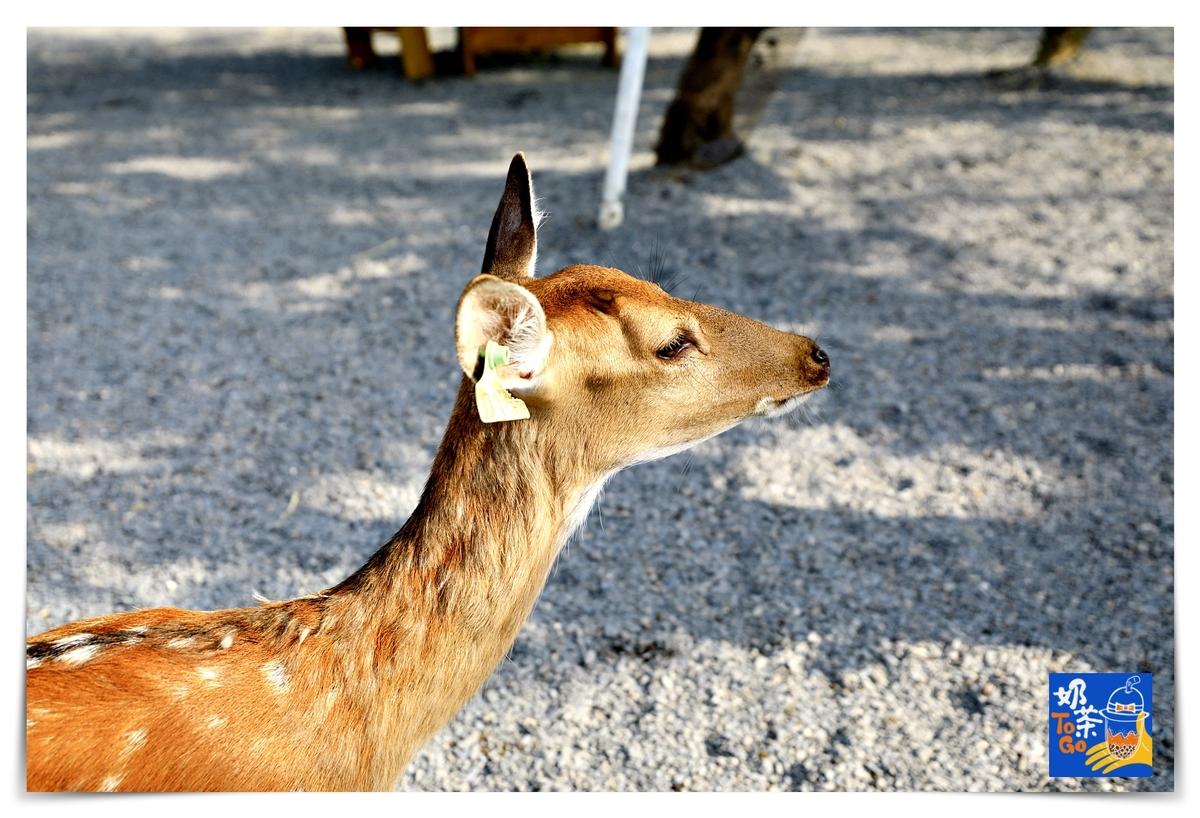 鹿境|墾丁版奈良場景,讓孩子親近動物、學習與小鹿和平相處~