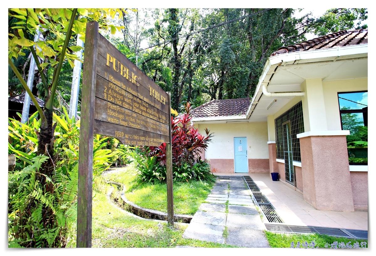 馬來西亞。古晉 實蒙谷野生動物保育中心Semenggoh Wildlife Centre  紅毛猩猩的復育天堂