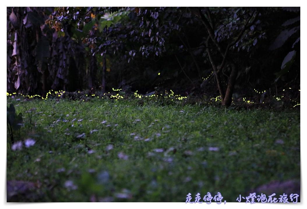 2018台北新店和美山螢火蟲季開始!賞螢步道、距離新店站步行10分鐘~(更新107/4/20蟲況)