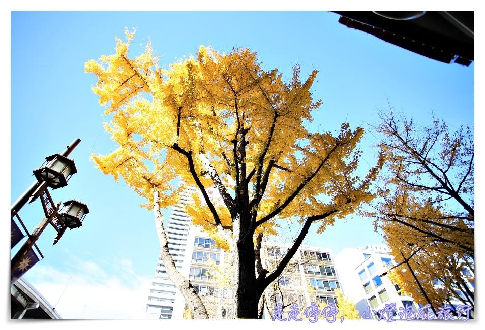 深秋的黄色飨宴|金黄色大阪御堂筋银杏大道,走一趟金黄、走一趟心灵~